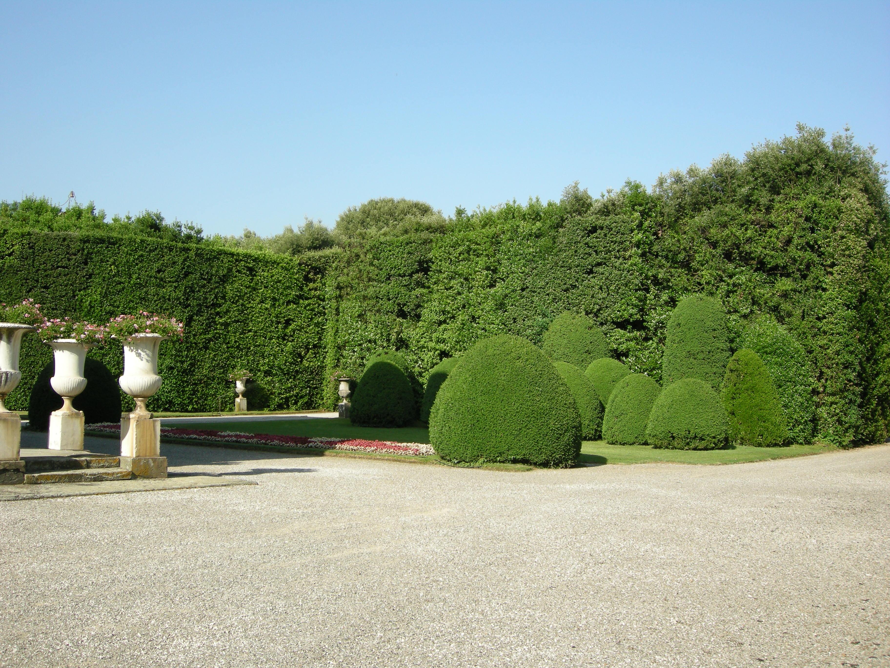 Siepi da giardino: le migliori specie arboree e la giusta distanza dal confine