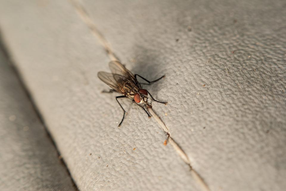 La piaga degli insetti nocivi in casa