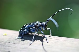 alrak-long-horned-beetle-2334236__340